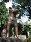 Hachko's statue in Shibuya Station