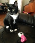 Tuxedo and a  favorite toy